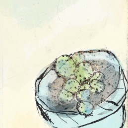 illustration potato cactus